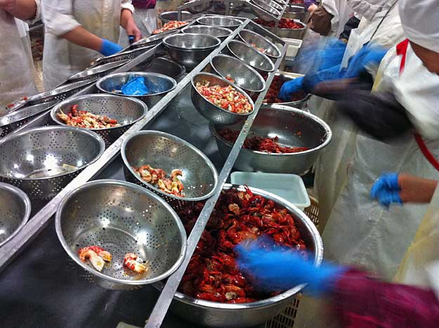Preparing and Packaging the Crawfish